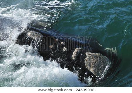 SR Whale Awash