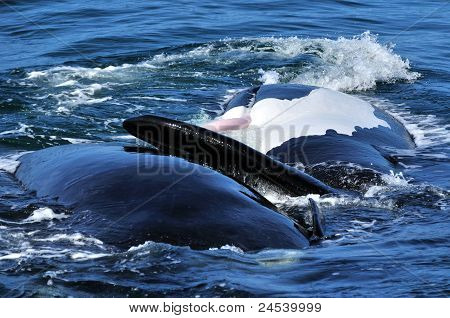 SR Whale show