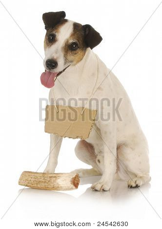 dog with bone - jack russel terrier wearing blank sign around neck sitting in front of dog bone