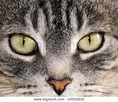 Katze Augen
