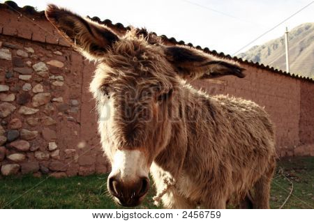 Friendly Donkey