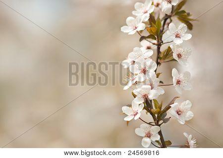 Beautiful Sunlit Spring Flowers