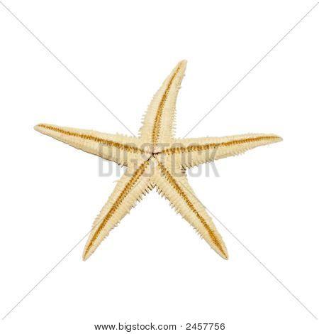 Starfish Close Up Isolated