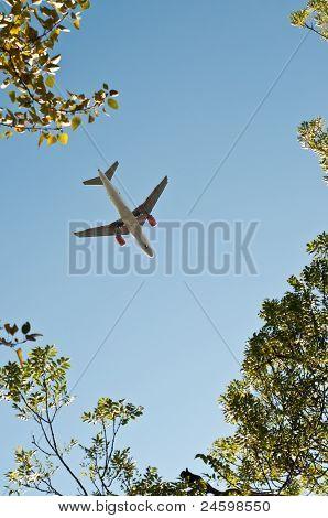 Plane About To Land Taken Through Trees