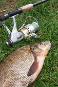 Close Up View Of Big Freshwater Common Bream And Fishing Rod With Reel On Natural Background.. poster