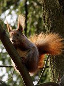foto of vinnitsa  - ( A squirrel hanging on tree ) - JPG