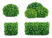 Vector Bush In Different Forms. An Ornamental Plant Shrub For The Design Of A Park, A Garden Or A Gr poster