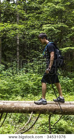 Hiking On Fallen Trees