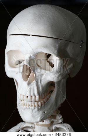 Spooky Human Skull