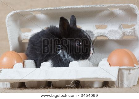 Black Bunny In The Eggbox