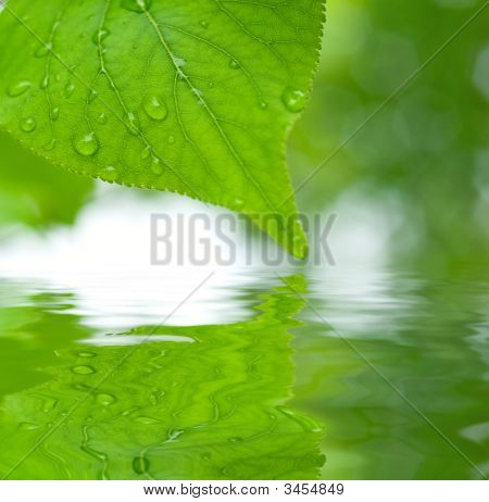 Green Leaves Reflecting In The Water
