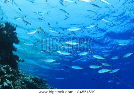 Fish on blue water background