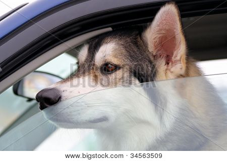 Dog Left Behind In Vehicle