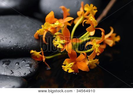 Still life with branch of orange orchid on pebbles