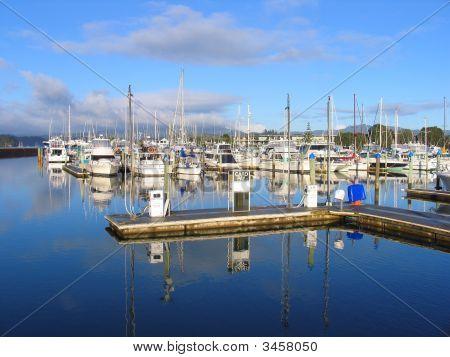 Harbor In New Zealand