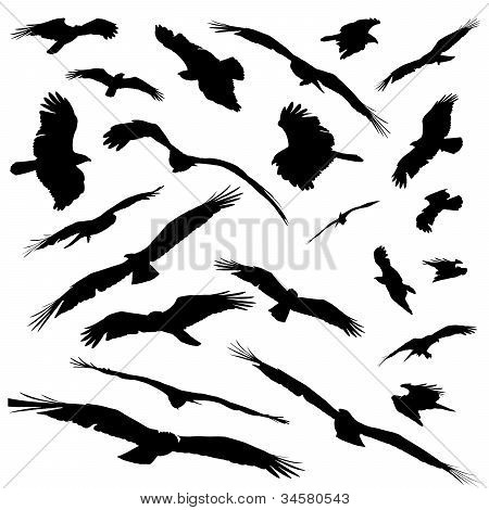Various Silhoutted Eagles Isolated