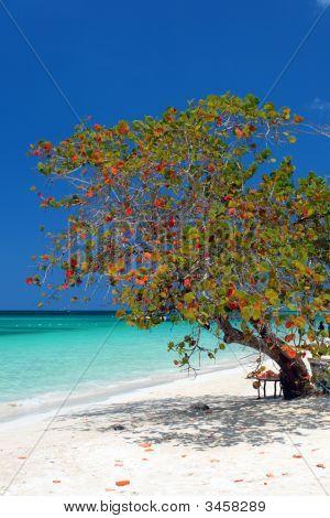 Seven Miles Beach, Negril, Jamaica..