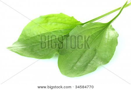 plantain leves isolated on a white