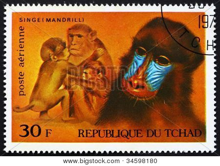 Postage stamp Chad 1972 Mandrills, African Wild Animals