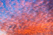 Colorful Orange Clouds Altocumulus On Evening Sky. Sunset Scenery poster