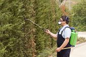 foto of pest control  - a gardener is Spraying pest control with uniform