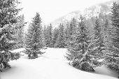 Black and white winter landscape, snowy winter trees. Winter snowy day scene. Monochromatic winter b poster