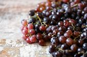 Fresh Juicy Grapes. Ripe Grapes. Harvest Grapes. poster