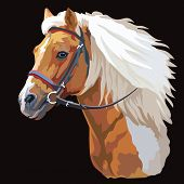 Colorful Horse Portrait With Bridle. Horse Head With Long Mane In Profile Isolated On Black Backgrou poster