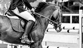 Horse And Rider In Uniform Performing Jump At Show Jumping Competition, Black And White. Horse Horiz poster