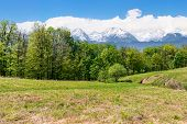 Idyllic Springtime Landscape Composite. Meadow Among The Forest. High Tatra Mountain Ridge With Snow poster