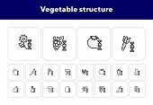 Vegetable Structure Line Icon Set. Set Of Line Icons On White Background. Dna Structure, Pear, Mushr poster