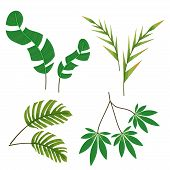 Beautiful Jungle Leaves And Flowers. Vector Elements Of Jungle Plants For Decoration And Design Conc poster