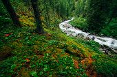 Beautiful Mystery Taiga With Wild River. Picturesque Red Green Flora. Photographer Shoot Of Mountain poster