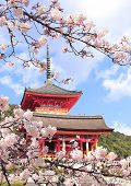 Kiyomizu-dera Temple (Clean Water Temple) and sakura flowers. Spring time in Kyoto, Japan. Sakura bl poster