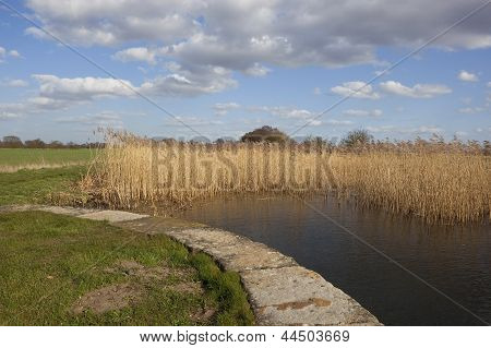 Reed Beds And Canal