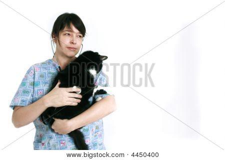 Cat At The Veterinarian