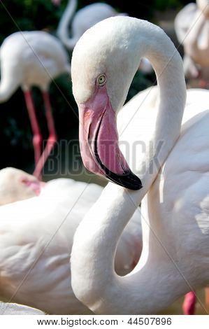 Close Up Of Flamingo Bird