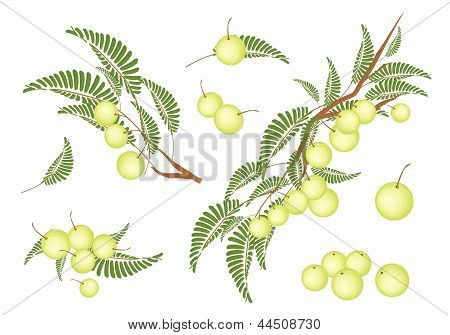 Set Of Indian Gooseberry On White Background