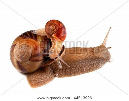 Small Snail On Top Of Big