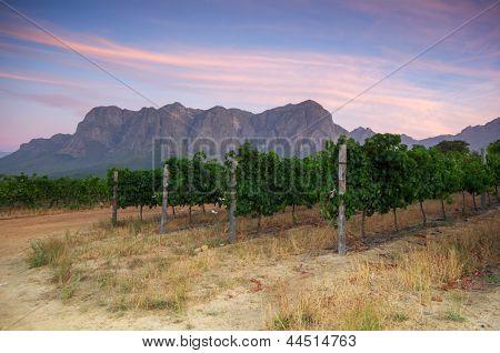 Stellenbosch, The Heart Of The Wine Growing Region In South Africa