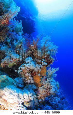 Elphinstone Reef