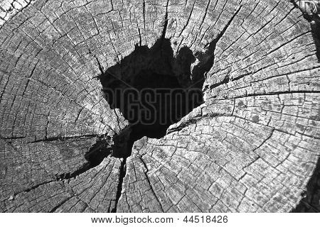 Slice of wood with hole