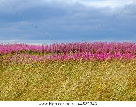 Beautiful Meadow Of Pink Wildflowers