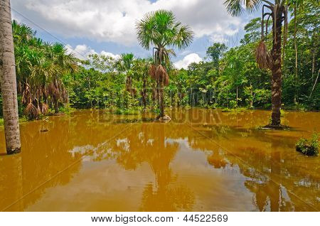 Flooded Lagoon During High Water In The Rain Forest