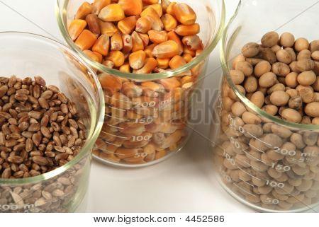 Wheat, Corn, Soy Seeds Grain