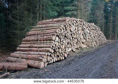 Pile Of Cutted Wood
