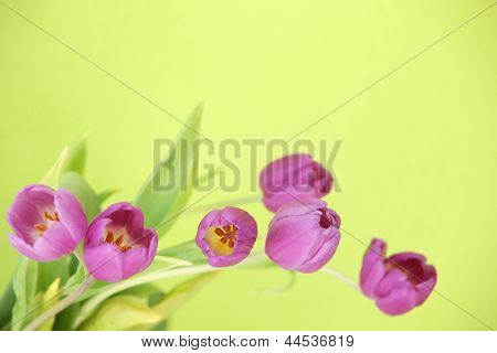 Floral Background With Purple Tulips