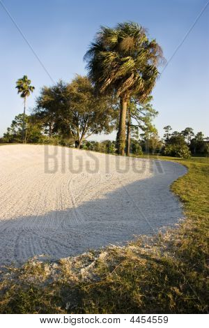 Sand Trap And Palm Trees