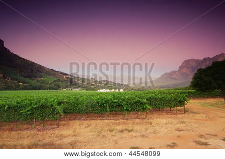 Landscape Image Of A Vineyard, Stellenbosch, South Africa..
