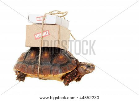 Tortoise Slow Mail